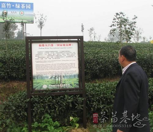 河南省信阳市茶苗良种繁育基地建设项目
